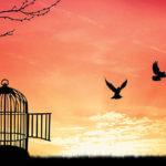Uncaged Birds Freedom