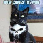 PAIN Punisher Cat Meme